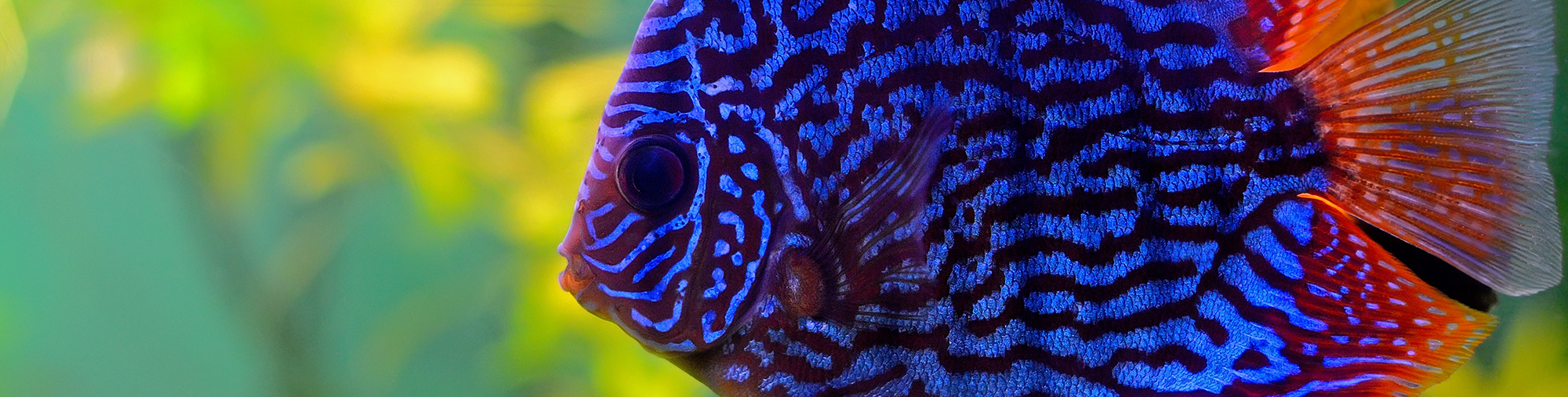 Fish color, מדפסות לייזר לקסמרק, מדפסות לייזר משולבות לקסמרק, מדפסות לייזר משולבות lexmark, מכונות צילום משולבות konica minolta, מדפ
