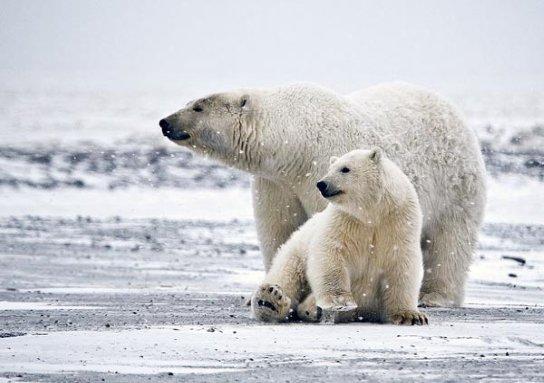 polar bear01 1, כונן חיצוני, מחשב לגיימרים, ראקאס, ראקאס ישראל, מחשב גיימינג
